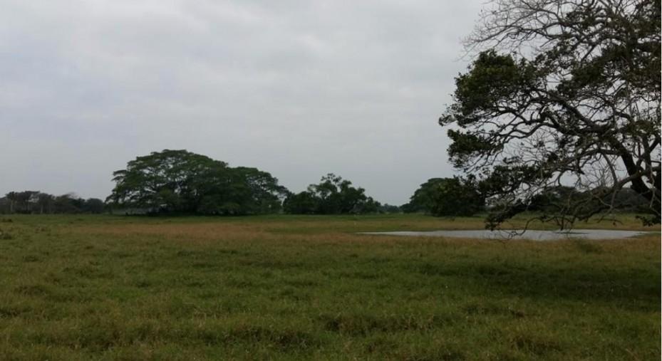 Predio rústico apto para ganaderia y agricultura en Venta