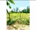 Terreno en Venta Localidad Mata de Uva